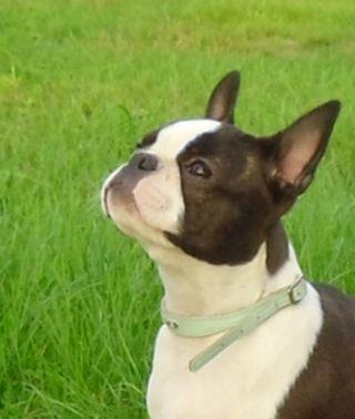 Daisy 5 m b