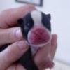 ax puppy